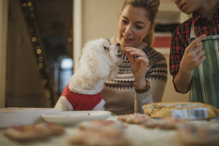 Mature woman is baking christmas biscuits with her son. Her pet dog is sitting on her knee and she is giving it a little bit of biscuit as a treat.