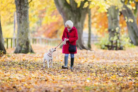 年配の女性は、彼女の愛犬と秋の散歩を楽しんでいます。