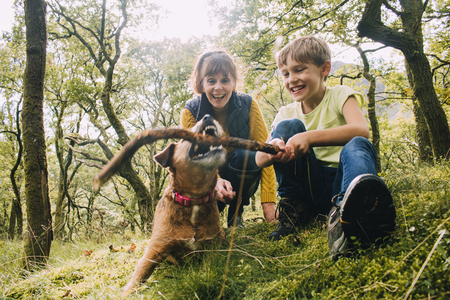 Little boy and his grandmother are playing with their pet dog in the woods with a stick.