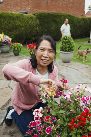 Senior woman is smiling for the camera while pruning the flowers in her garden. 版權商用圖片