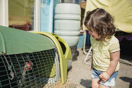 Little girl standing in the back garden and looking into the chicken coop with curisoty. She looks to see what is in and smiles at the chicken. Stock Photo