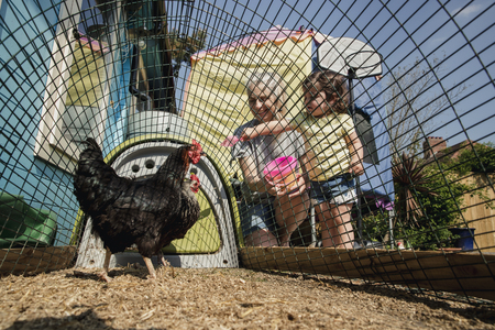 Low angle view of a little girl stood with her grandmother feeding the chickens. They are stood in the back garden at the chicken coop dropping chicken feed into the coop. Stock Photo