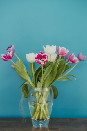 Vase of tulips on top of a side table. The colourful flowers are infront of a bold coloured teal wall. Stockfoto