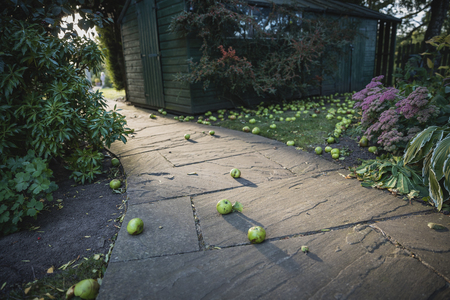 A low-down perspective shot of a curved garden footpath, fallen green apples can be seen scattered around the ground.