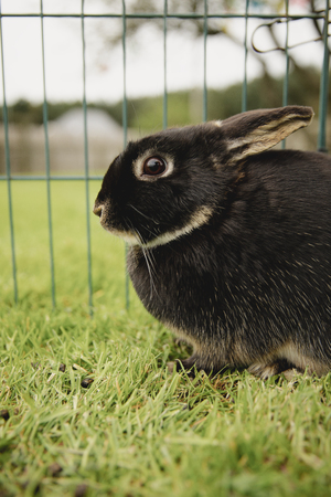Close-up of a pet rabbit outdoors while in a cage.