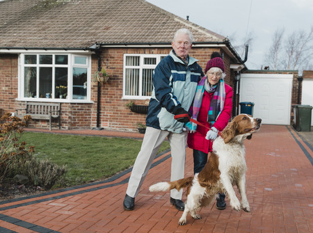 Senior couple are struggling with their pet dog as he is pulling them on his lead.