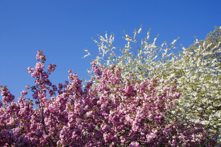 Low angle shot of a pink blossom tree. Stock fotó
