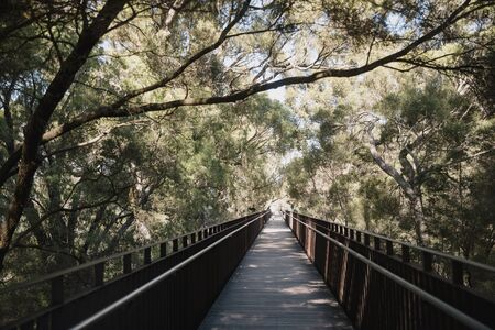 Elevated walkway in Kings Park, Perth, surrounded by trees on a summers day.