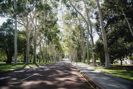 Public road in Perth, Australia lined with trees.