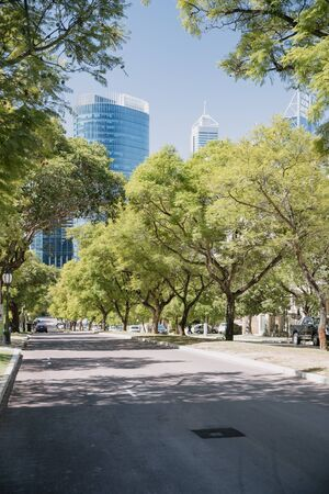 Road in Perth, Australia lined with trees with a view of tall glass buildings at the end of the street.