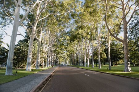 Public road in Perth, Australia lined with trees. 写真素材 - 124815429