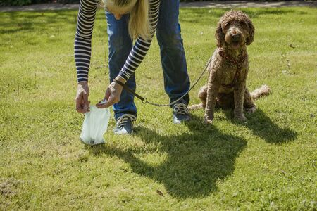 A mature woman cleaning up after her dog as she picks up his dog poo.