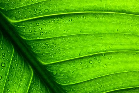 patchy: Close-up of  green leaf. Abstract background. Stock Photo