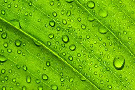 Close-up of  green leaf. Abstract background. photo