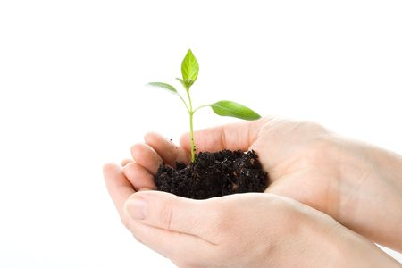 Transplant of a tree in female hands on a white background. Concept for environment conservation. Stock Photo - 3121828