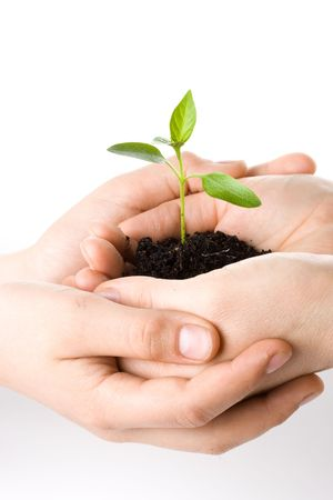 origins: Transplant of a tree in female and childrens hands on a white background. Concept for environment conservation.