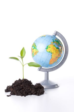 The globe and transplant of tree. Concept for environment conservation. Stock Photo - 3184973