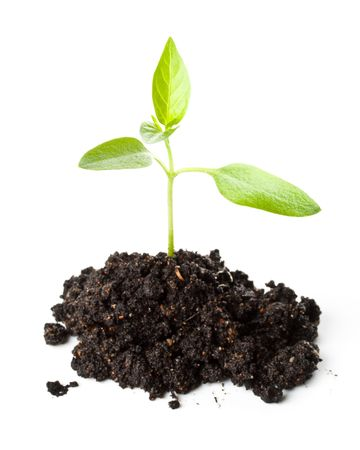 transplant: Transplant of a tree on a white background. Concept for environment conservation. Stock Photo