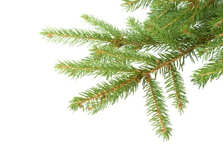 Fir tree branch on a white background. Close up. Christmas decoration. photo