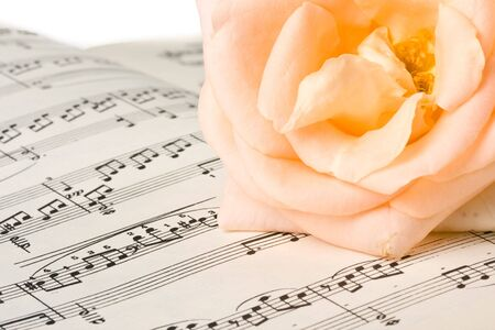 The rose laying on a musical notes on a white background Stock Photo - 3544976
