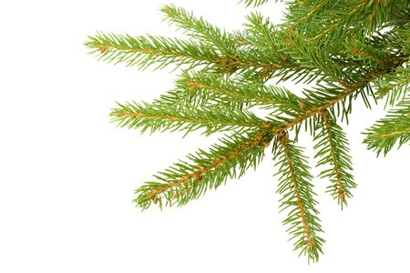 Fir tree branch on a white background. Close up. Christmas decoration. Stock Photo - 3582602