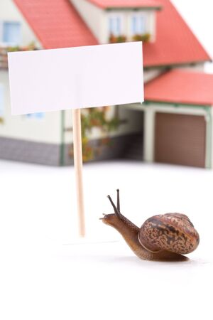 slithery: Garden snail and miniature house on a white background. Buying house concept Stock Photo