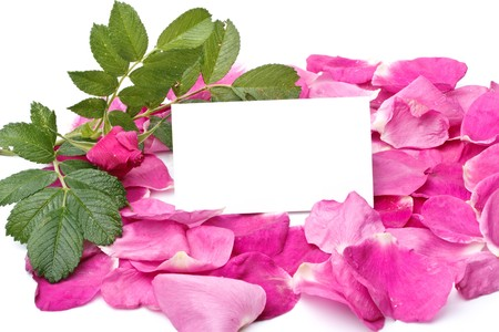Flower, petals and blank card for your text photo