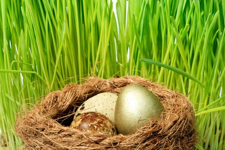 Gold egg in a nest. Concept for success. Stock Photo - 4338778