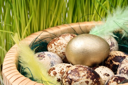 Gold egg in a nest. Concept for success. photo
