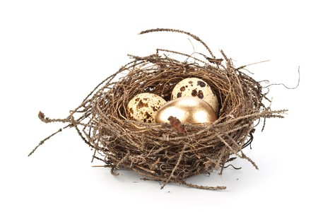 Gold egg in a real nest. Concept for success. Stock Photo - 4388807