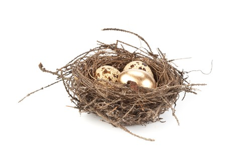 Gold egg in a real nest. Concept for success. Stock Photo - 4402708