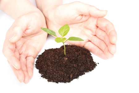 Transplant of a tree in female hands on a white background. Concept for environment conservation. photo