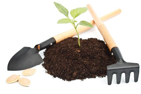 Transplant of a tree and garden tools on a white background. Concept for environment conservation. photo