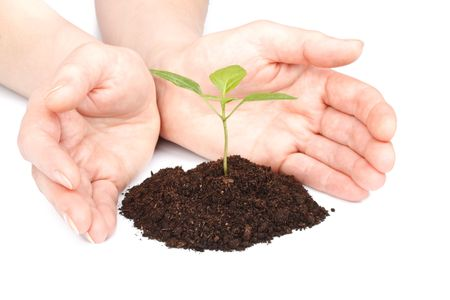 Transplant of a tree in female hands on a white background. Concept for environment conservation. Stock Photo - 4590078