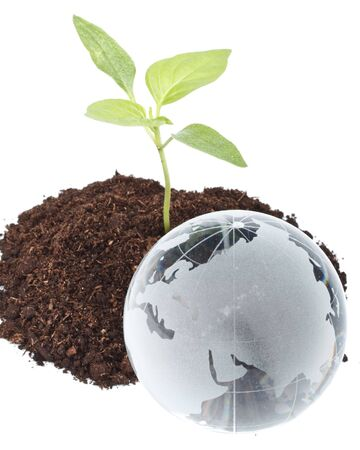 Transplant of a tree and globe on a white background. Concept for environment conservation. Stock Photo - 4758323