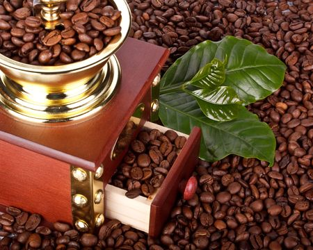 Old-fashioned coffee grinder, coffee beans and green leaves photo