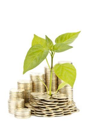 tree diagram: Diagramma di crescita da monete e trapianto di alberi su uno sfondo bianco