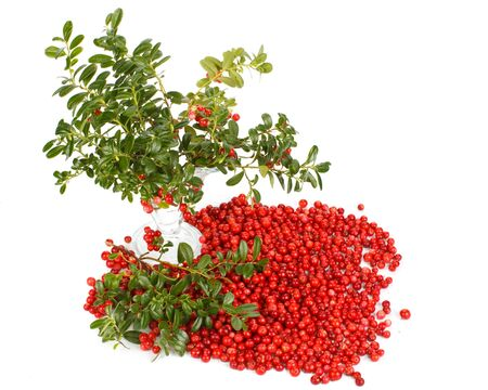 mountain cranberry: Fresh cowberry with green leaves on a white background