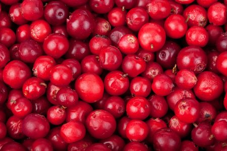 mountain cranberry: Abstract background from fresh cowberry. Close up.