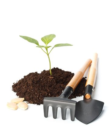 tree growing: Transplant of a tree and garden tools on a white background. Concept for environment conservation. Stock Photo