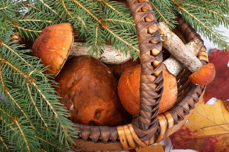 Autumn still-life with mushrooms, a basket and fir-tree branches on a white background. photo