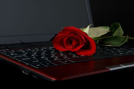 Modern notebook and rose on a black background photo