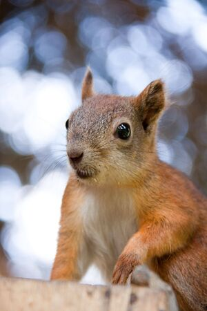 Cute squirrel in a forest. Close up. Stock Photo - 6687037