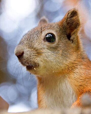 Cute squirrel in a forest. Close up. Stock Photo - 6687043