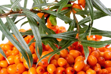 bacca: Branch of sea-buckthorn berries and handful of berries on a white background.