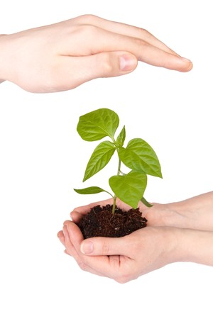Transplant of a tree in hands on a white background. Concept for environment conservation. Stock Photo