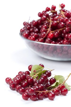 guelderrose: Plate with mature berries of a guelder-rose (viburnum) on a white background