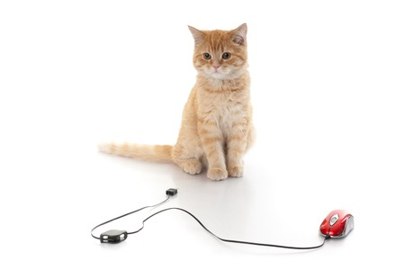 Little kitten and computer mouse on a white background. photo