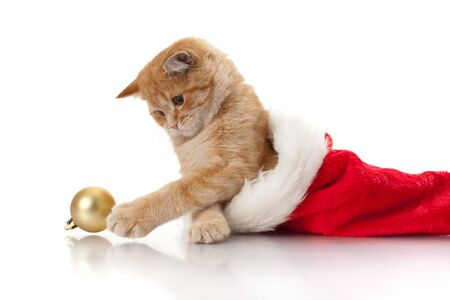 cats playing: Little kitten and headdress of santa claus on a white background.