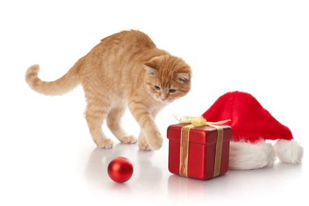 new year cat: Little kitten, gift box and headdress of santa claus on a white background. Stock Photo